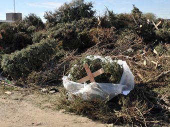 del 5 al 19 de enero recibieron, a través de cuatro centros de acopio, un total de mil 722 árboles navideños.