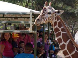 Información del zoológico de Guadalajara