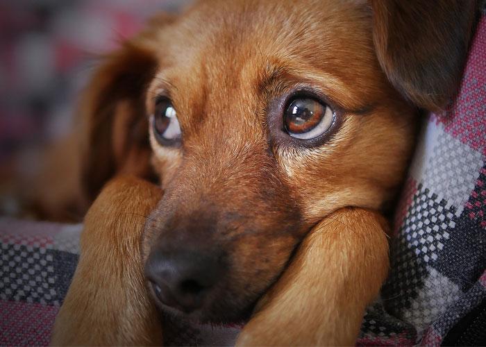 Beneficios de tener perros