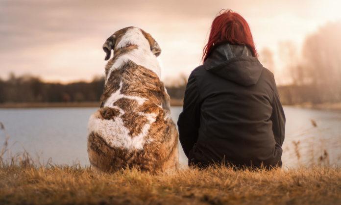 3 beneficios de tener perros