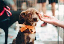 Perrito en adopción
